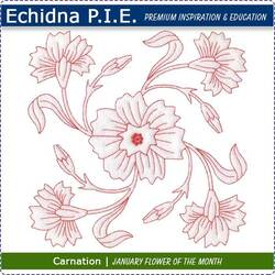 Echidna P.I.E. Carnation Birth Month Flower