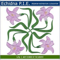 Echidna P.I.E. Lily May Birth Month Flower
