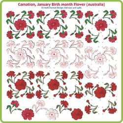 Carnation January Birth Month Flower by Lindee Goodall