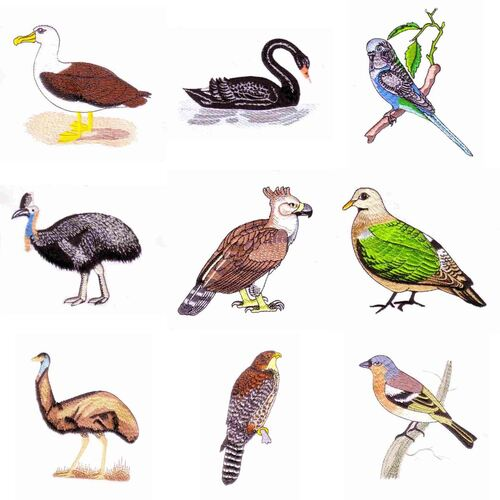 Aussie & N Z Birds (23 designs) by Outback Embroidery - Download
